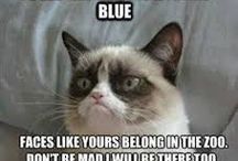Animal quotes / funny animal quotes