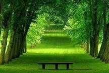 Verde que te quiero Verde / by Tienda Verde