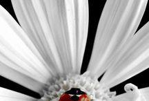 Imágenes flores