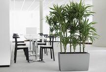Donice Lechuza / Klasyczna elegancja, będąca znakiem rozpoznawczym ekskluzywnych donic Lechuza, łączy się w modelu Cararo z nowoczesnym, uniwersalnym wygladem. Donica znajdzie zastosowanie nie tylko w domu, ale również na tarasach ogrodowych – świetny wybór dla osób kochających rośliny, jednak nie mających czasu na ich regularne podlewanie.  http://www.sklep.gardenplanet.pl/gp,d575,1,pl.html