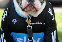 Dogs and cycling / DOGS