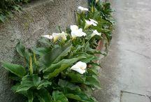 rose & company / fiori