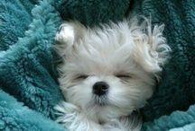 cute!!!!!!!!!!!!!!!!!!!!!!