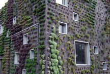 vertical green | urban gardening