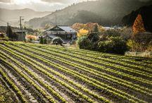 Farm - Japan