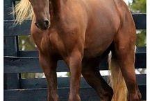 Koněv