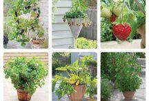 Kwiaty, owoce, drzewa, rośliny / Najpiękniejsze zdjęcia - kwiaty, owoce, drzewa, rośliny