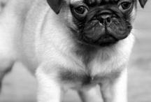Pug love / by Angee Turnbull
