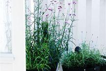 trädgård - krukor