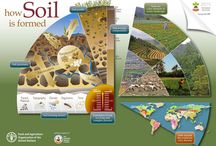 Soil / Learn about soil!