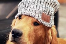 Fluffy LYM Friends / Even our pets want to join us in the fight against childhood cancer. Let's see your fluffy friend in your Love Your Melon gear!