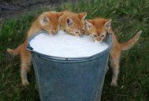 Kätzchen lustig