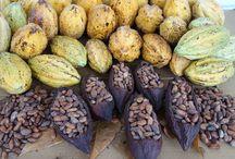 Chocolate Making Education