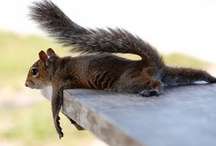 Nutty / All squirrel related