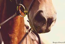 Gif horse