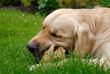 Dog stuff / by Tracy Perakslis
