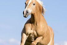 equi-com / Was Manager von Pferden lernen können