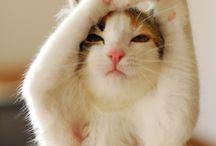 Miau miau...