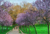 Peisaje de primăvara !