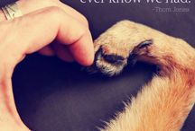 Pet Related Pics
