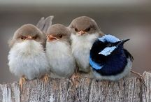 Cute birds... / The sound of Birds stop the noise in my mind!