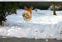 прыжки животных