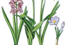 Tavaszi virágok képek