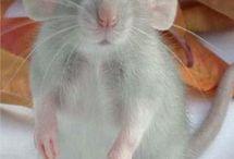 валяние мышки и зайки