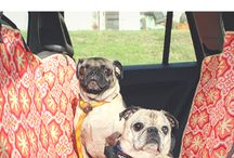 This Pug Life Pet Product Reviews / Reviewing healthy dog treats and dog food, and innovative toys and pet products.
