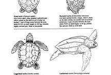 Anatomie dieren