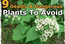 plants to avoid