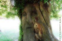 Un tempo gli alberi avevano occhi