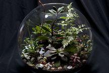Plants & Living Things