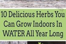 Evde tarım
