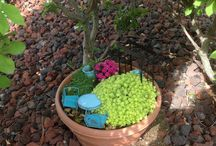 Frogs and Fairies in the Garden / Mini gardens