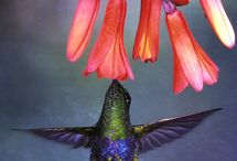 Humming Birds / by Bill Shattuck