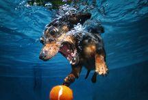 DRÔLES DE DOG / Seth Casteel est un génie !