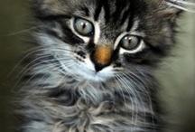 Gatti / Meravigliosi sensoriali intuitivi fellini!