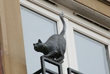 The cats of York