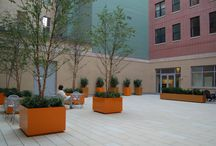 Institutional Garden