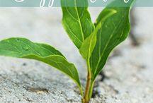 vida sustentable y natural