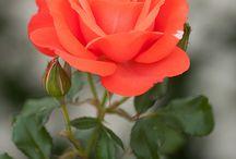 Фото-цветы