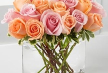 Spring / At Bice's Florist, we compete strongly with the finest designers, retailers and service providers around the world in the areas of design, service and presentation. We strive to provide our customers with the highest standard of quality in product, design, service and presentation while never forgetting value.
