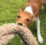 Victoria Stilwell, Training Positively! / Positive Dog Training