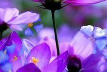 Giardino di fiori