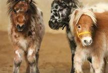 chevaux miniatures