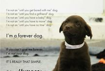 Pets / Our best friends forever