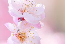 SPRING . . . PICS / by Tammy  | My Life Abundant