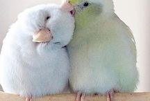 güzelsiniz küçücük bir damlasınız #sevgi var içinizde utansın herkes sizden çok güzelsiniz  #hayvanlar