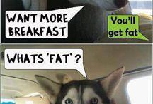 lets get fat!